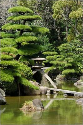 Японский сад 1